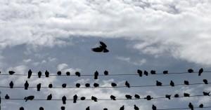 Λαθροθήρες εγκλώβισαν δεκάδες πουλιά μέσα σε δίχτυ ελαιώνα