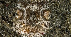 Ο «εφιάλτης του βυθού», ένα δηλητηριώδες ψάρι αλλιώτικο από τα άλλα