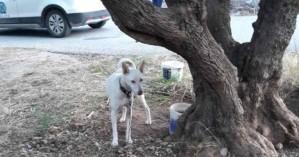 Στο αυτόφωρο για παθητική κακοποίηση σκύλου στο Νιο Χωριό (φωτο)