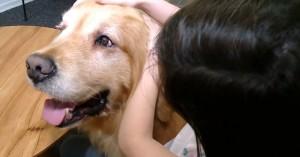 Ο πρώτος σκύλος θεραπευτής για κακοποιημένα παιδιά (βίντεο)