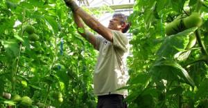 Τι θα συμβεί στον πλανήτη αν υιοθετήσουμε αποκλειστικά τις βιολογικές καλλιέργειες