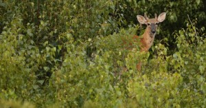 Μίσιγκαν: Κυνηγός πέρασε τον αδερφό του για ελάφι και τον πυροβόλησε