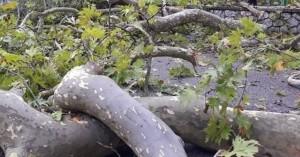 Δέντρο καταπλάκωσε και σκότωσε άνδρα στα Χανιά