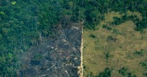 Αμαζόνιος: Σε δραματική κατάσταση ο πνεύμονας της γης
