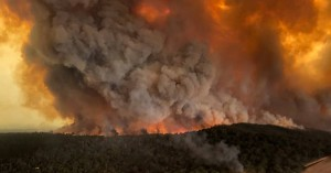 Φωτιές στην Αυστραλία: Σπαρακτικές εικόνες με νεκρά ζώα και ολοκαύτωμα για την πανίδα