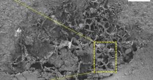 Αποκαλύφθηκαν απολιθώματα μυκήτων ηλικίας τουλάχιστον 715 εκατομμυρίων ετών