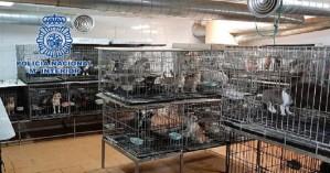 Σάλος στην Ισπανία: Έκοβαν τις φωνητικές χορδές των σκύλων για να μη γαβγίζουν