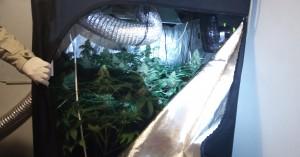 Ένας 35χρονος είχε στο σπίτι του ολόκληρο εργαστήριο καλλιέργειας κάνναβης! (φώτο)