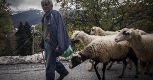 «Ανάσα» ύψους 300 εκατ ευρώ για την χώρα από το ευρω-πρόστιμο για τα βοσκοτόπια