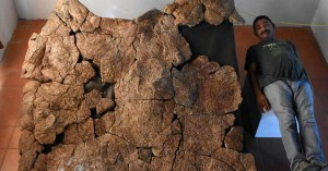 Stupendemys, η γιγάντια χελώνα με μέγεθος αυτοκινήτου έζησε πριν από εκατομμύρια χρόνια