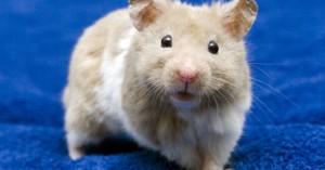 Άφηνε ελεύθερα ποντίκια και χάμστερ σε ξενοδοχεία για να μένει τσάμπα