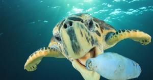 Υπάρχει λόγος που οι θαλάσσιες χελώνες τρώνε το πλαστικό των ωκεανών