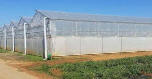 Αποζημιώσεις λόγω κορωνοϊού ζητούν οι παραγωγοί θερμοκηπιακών καλλιεργειών Κρήτης