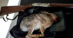 Ρέθυμνο: Συνελήφθη για παράνομο κυνήγι λαγού και
