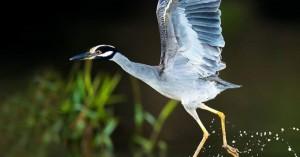 Τα όμορφα, εξωτικά πτηνά της Κόστα Ρίκα