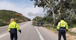 Συνεχείς πτώσεις δέντρων στα Χανιά από τους θυελλώδεις ανέμους (φωτο - βίντεο)