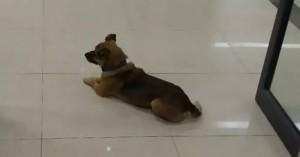 O Χάτσικο της Ουχάν: Σκύλος περιμένει επί τρεις μήνες σε νοσοκομείο το αφεντικό του