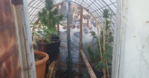 Ηράκλειο: Κατασχέθηκαν 62 δενδρύλλια κάνναβης και αυτοσχέδιο θερμοκήπιο (φωτο)