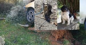 Τροχαίο Βουκολιές: Βρέθηκε το ένα σκυλάκι του 60χρονου που είναι στην εντατική