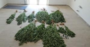 Ηράκλειο: Νέες συλλήψεις για ναρκωτικά