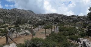Το 8ο Μικρο-Απόθεμα στο Δίκτυο Μικρο-Αποθεμάτων απειλούμενων φυτών Κρήτης είναι γεγονός
