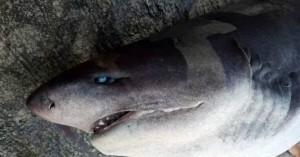Ψαράδες έβγαλαν καρχαρία στη στεριά με γερανό (φωτο - βιντεο)