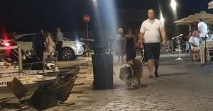 Χανιά: Απαγορεύεται η στάθμευση στο λιμάνι αλλά ...έπρεπε να ολοκληρώσει τον δείπνο του