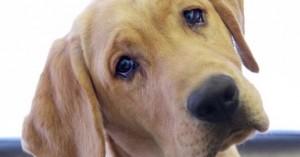 Κακοποίησε τον σκύλο του και ένα ανήλικο αγόρι που προσπάθησε να βοηθήσει το ζώο