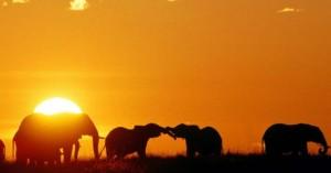 Το «κυνήγι» της λαθροθηρίας απέδωσε καρπούς στην Κένυα