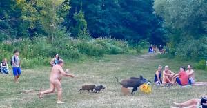 Απίστευτες φωτο: Γυμνός άνδρας τρέχει πίσω από αγριογούρουνα που του έκλεψαν το λάπτοπ!