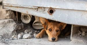 Έχουν πράγματι τα ζώα «έκτη αίσθηση» και διαισθάνονται τους σεισμούς