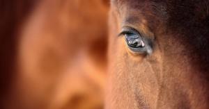 Μυστήριο με ακρωτηριασμό αλόγου στη Σουηδία: Βρέθηκε νεκρό. Του είχαν αφαιρέσει μάτι, αυτί