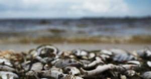 Σε τοξικά φύκια οφείλεται ο μαζικός θάνατος των θαλάσσιων ζώων στη Χερσόνησο της Καμτσάτκα