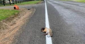 Χάραξαν νέα γραμμή στον δρόμο περνώντας πάνω από νεκρό ζώο