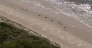 Τα απομονωμένα νησιά στα οποία πεθαίνουν φάλαινες και δελφίνια