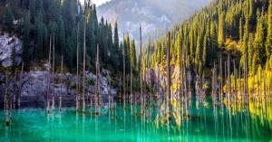 Το εντυπωσιακό υποβρύχιο δάσος από έλατα μέσα σε λίμνη