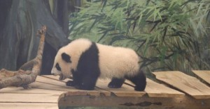 Ο Φαν Σινγκ έκλεψε την παράσταση στο ζωολογικό πάρκο Ouwehands στην Ολλανδία