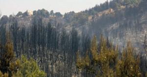WWF: Χάθηκαν 430 εκατομμύρια στρέμματα δασών σε 13 χρόνια