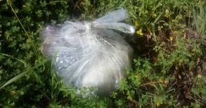 Έκλεισαν σε πλαστική σακούλα νεογέννητα κουταβάκια (φωτο)