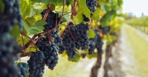 Παράταση έως 31/3 για τις αιτήσεις επιστροφής ή διαγραφής ΕΦΚ στο κρασί