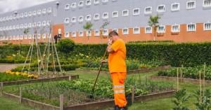 Τα φυτά στις φυλακές μειώνουν τη βία