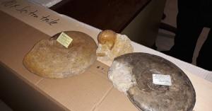 Μια πλούσια συλλογή θαλάσσιων απολιθωμάτων απέκτησε ο Δήμος Ρεθύμνης
