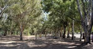 Δασοπονικά είδη για τη θωράκιση των πόλεων στην κλιματική αλλαγή αναζητά το ΑΠΘ