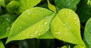 Η νοημοσύνη των φυτών