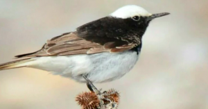 Ένα αρκετά σπάνιο πουλί εντοπίστηκε στο απολιθωμένο δάσος της Λέσβου