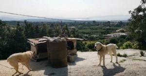 Nέα σύλληψη ιδιοκτήτη σκυλιών στα Χανιά για κακοποίηση των ζώων