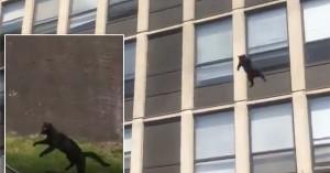 Γάτα πηδά από 5ο όροφο κτιρίου που καίγεται και η προσγείωση εντυπωσιάζει! (βίντεο)