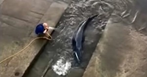 Αναστάτωση στο Λονδίνο για μια φάλαινα που… χάθηκε στον Τάμεση