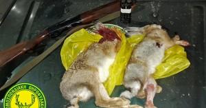 Κυνηγούσε παράνομα με γουρούνα, τράκαρε με ελιά και τον έπιασαν! (φώτο)