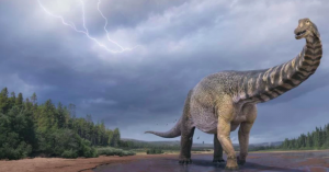 Αυστραλοτιτάν: Δεινόσαυρος ανακαλύφθηκε στην Αυστραλία είχε μήκος όσο ένα γήπεδο μπάσκετ